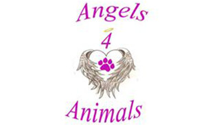 Angels 4 Animals